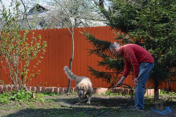 Зоогостиница-передержка собак и ...