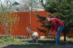Зоогостиница-передержка соб... в городеМосква
