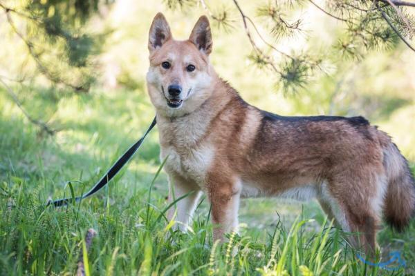 Пёс-звезда ищет дом в городеСанкт-Петербург