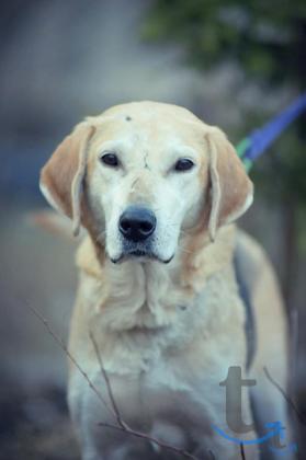 Невероятный красавец-пёс, м... в городеСанкт-Петербург