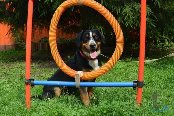 Зоогостиница-передержка собак и других животных