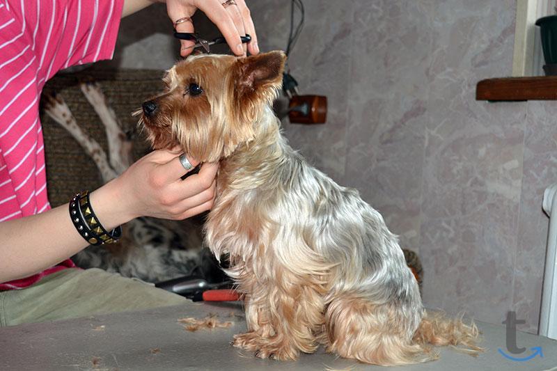 Передержка домашних собак в Москве