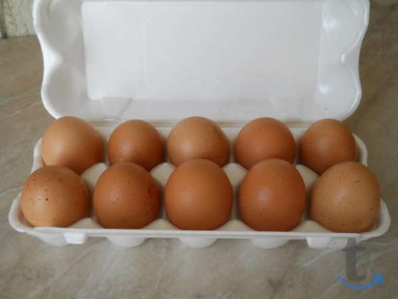 Продаю яйца куриные