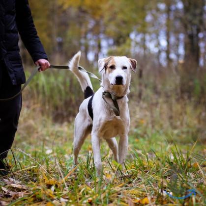 Эксклюзивный пёс в ответств... в городеСанкт-Петербург