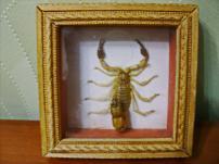 Модульная картина Скорпион.