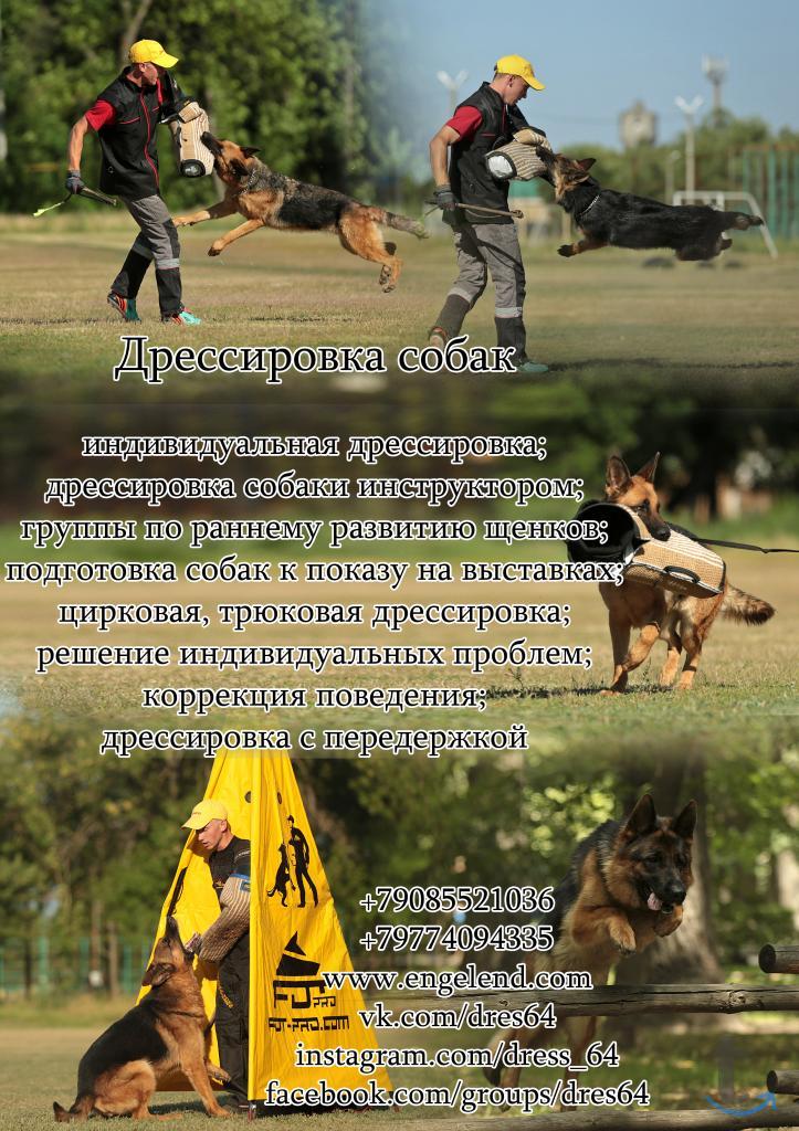 Дрессировка собак САРАТОВ, ЭНГЕЛЬС