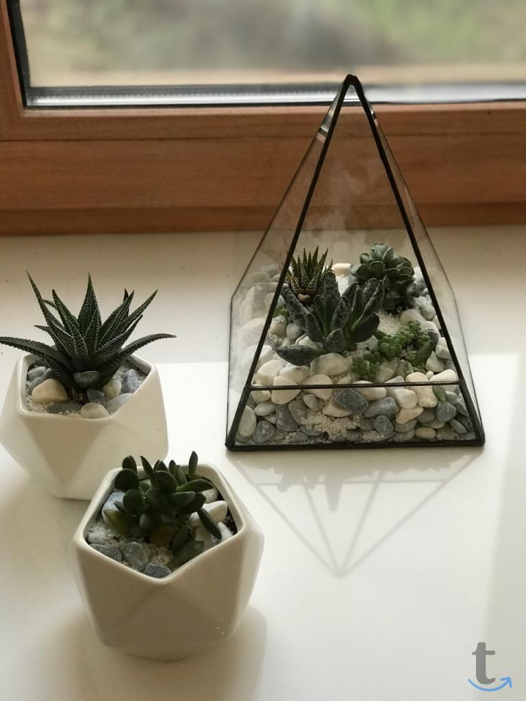 Флорариум – элемент домашнего цв...