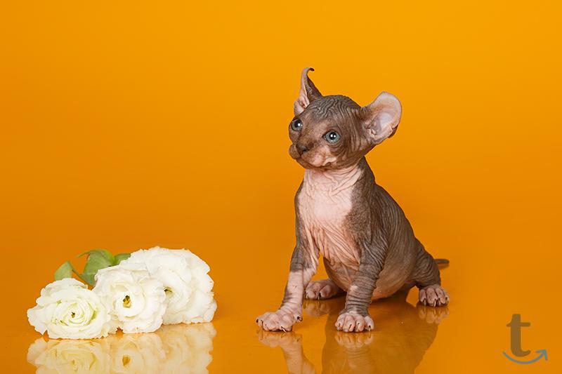 Уникальное животное- Эльф, Бамби...