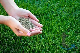 Посев газона. Укладка рулонного ...