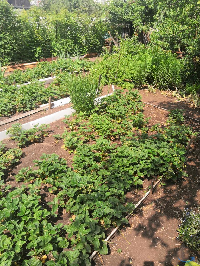 Продам классный сад на с-з