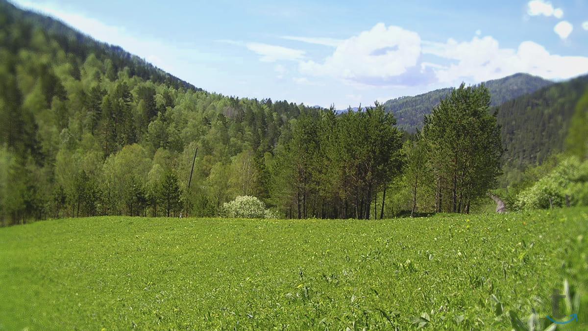 Земельный участок на Алтае 9 гек...