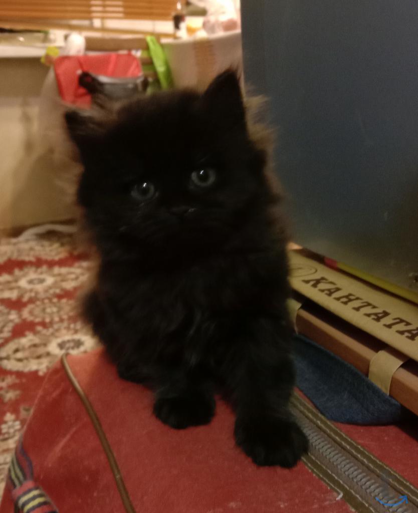 Котята для несуеверных