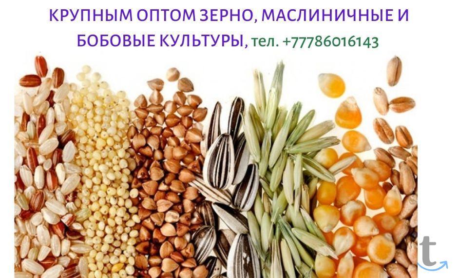 Экспорт с Казахстана зерновых, м...