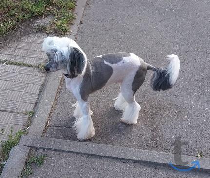 Объявление: Стрижка собак и.. - Октябрьский (Люберцы)