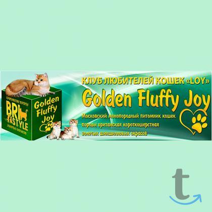 Элитные Британские золотые котят...