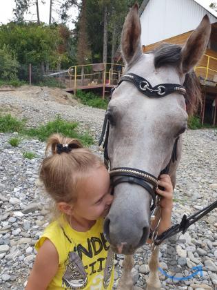 Конные прогулки в Сочи, Дагомысе...