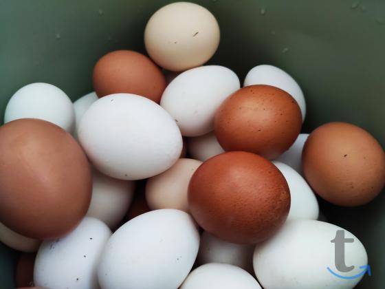 Домашние диетические яйца